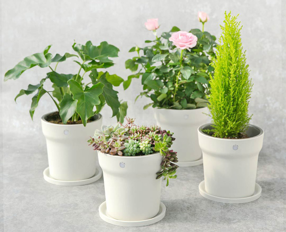 Xiaomi expands its line of plant care products with a for Plante xiaomi